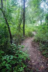 One of many paths